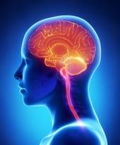 Cervello umano illuminato